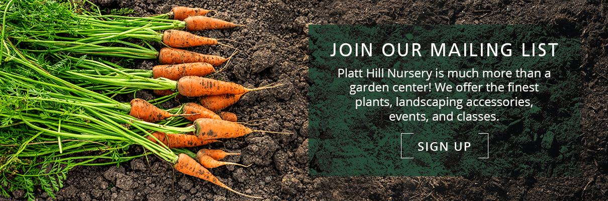platt hill vegetable gardening beginners carrots subscribe button