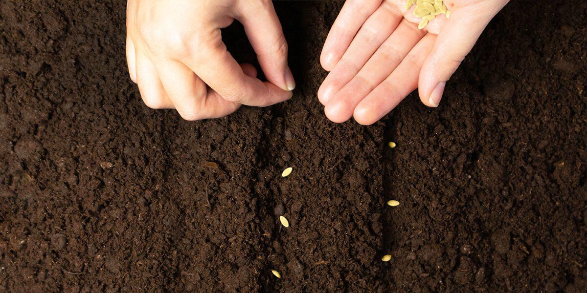 platt hill vegetable gardening beginners planting veggie seeds