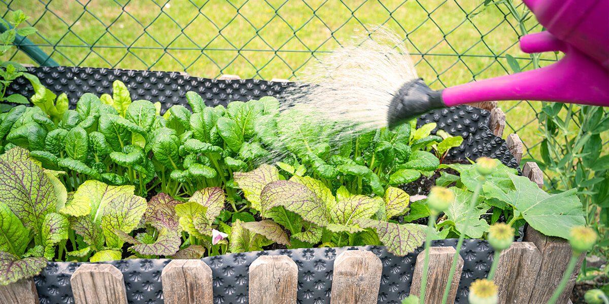 platt hill vegetable gardening beginners watering small vegetable bed