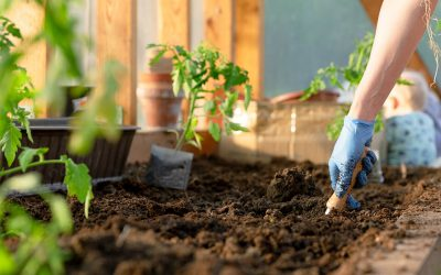 A Guide to Enjoyable and Effective Garden Maintenance