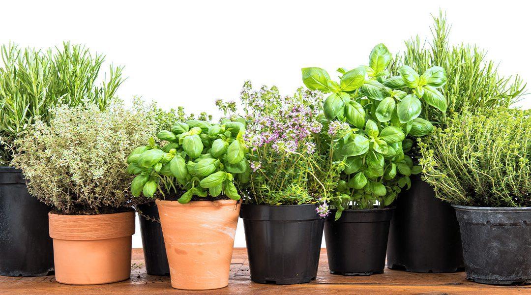 How to Grow a DIY Indoor Herb Garden
