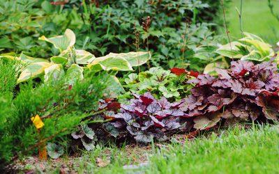 8 Shade-Loving Perennials