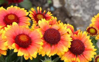 Sun-Loving Perennials That Are Easy to Grow