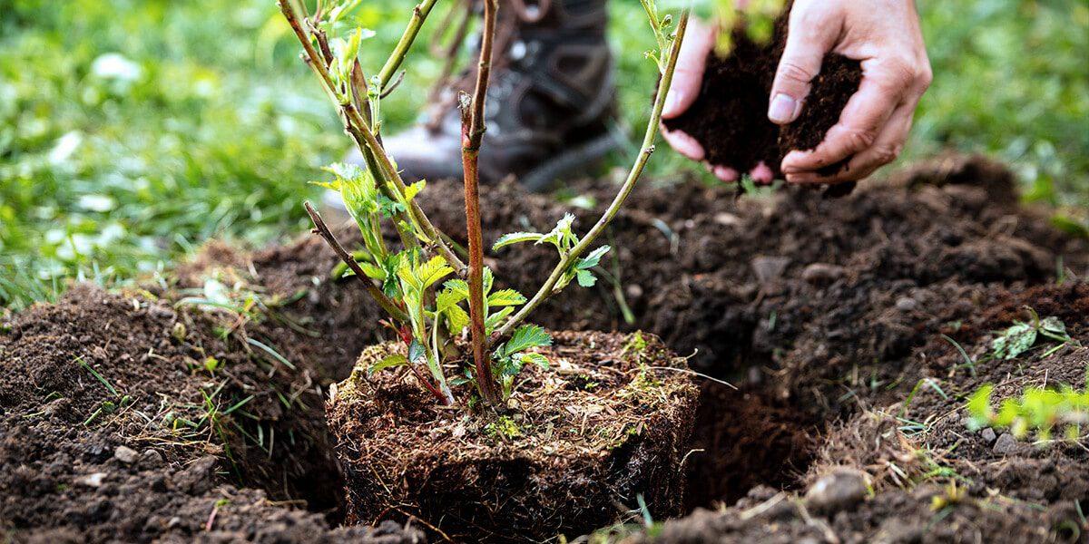 platt hill zone 5 garden checklist planting shrub