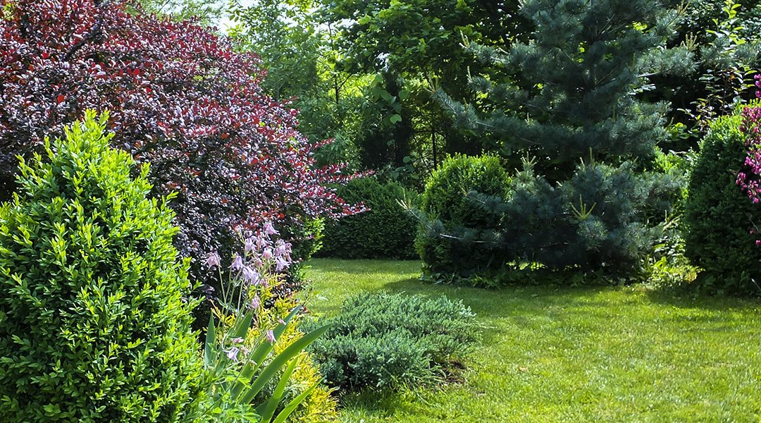 Great Shrubs for Privacy & Shade