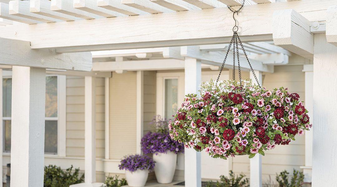 Hanging Basket Care