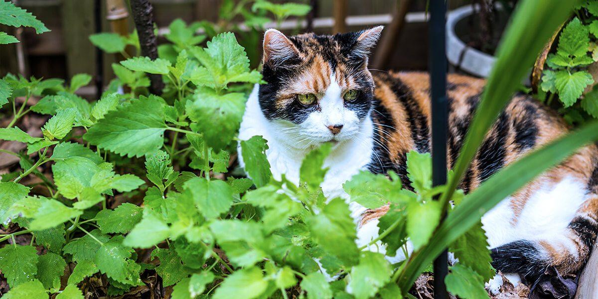 platt-hill-diy-catnip-planter-cat-in-leaves