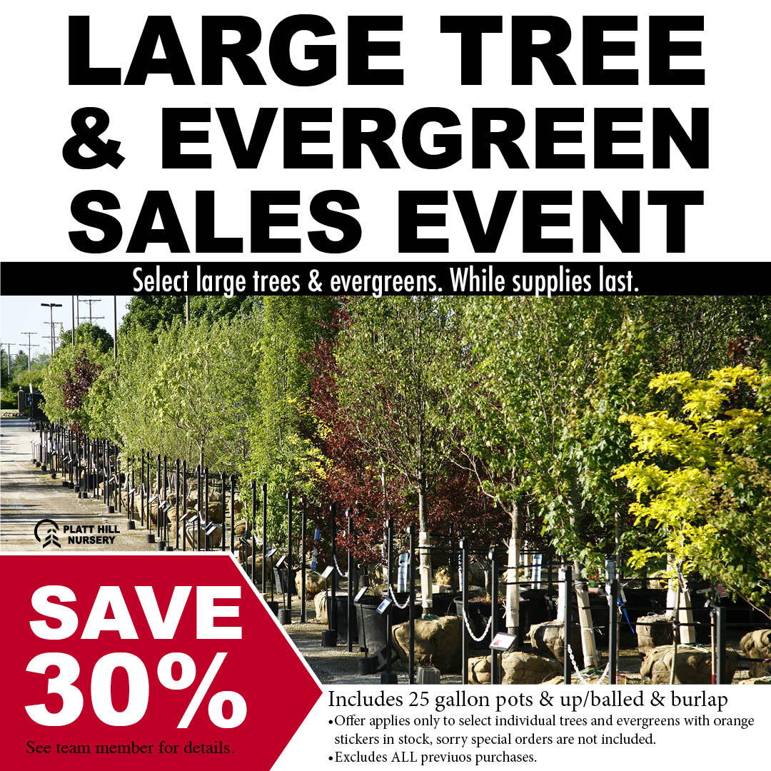 Select Large Trees and Shrubs on sale