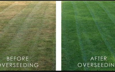 When Should I Overseed my Lawn?