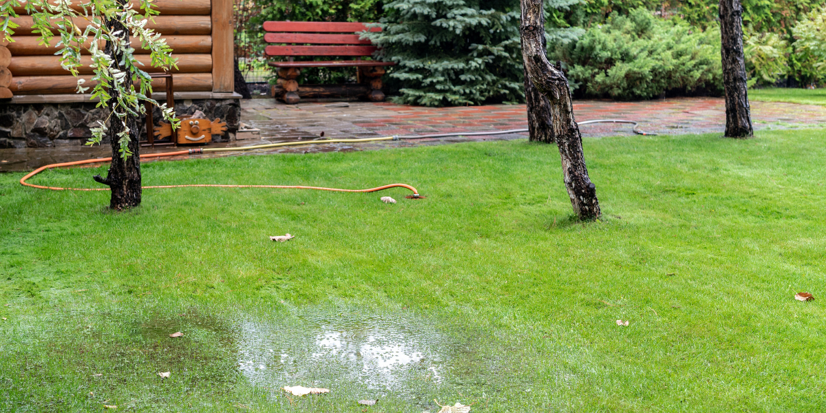a lawn that is flooded and has been invaded by creeping charlie platt hill nursery