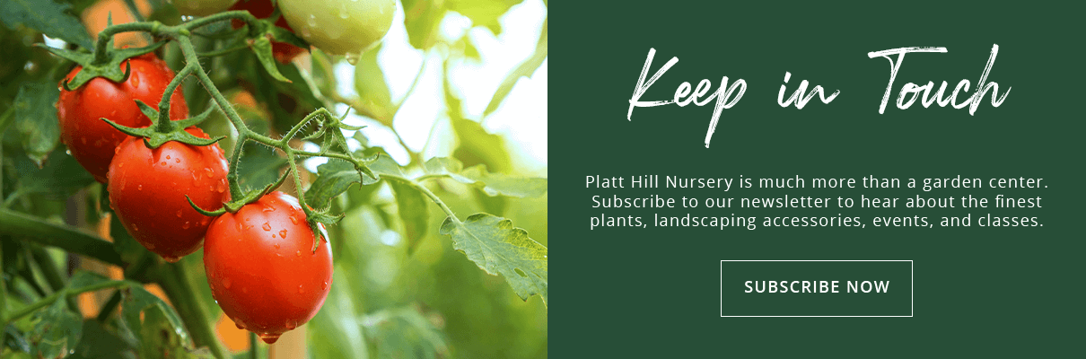 sign up for our newsletter to keep in touch with us! Platt Hill Nursery