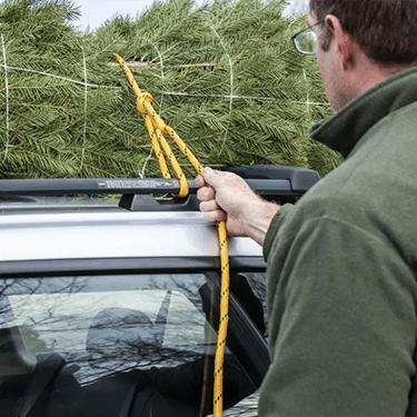 Loading fresh cut Christmas tree