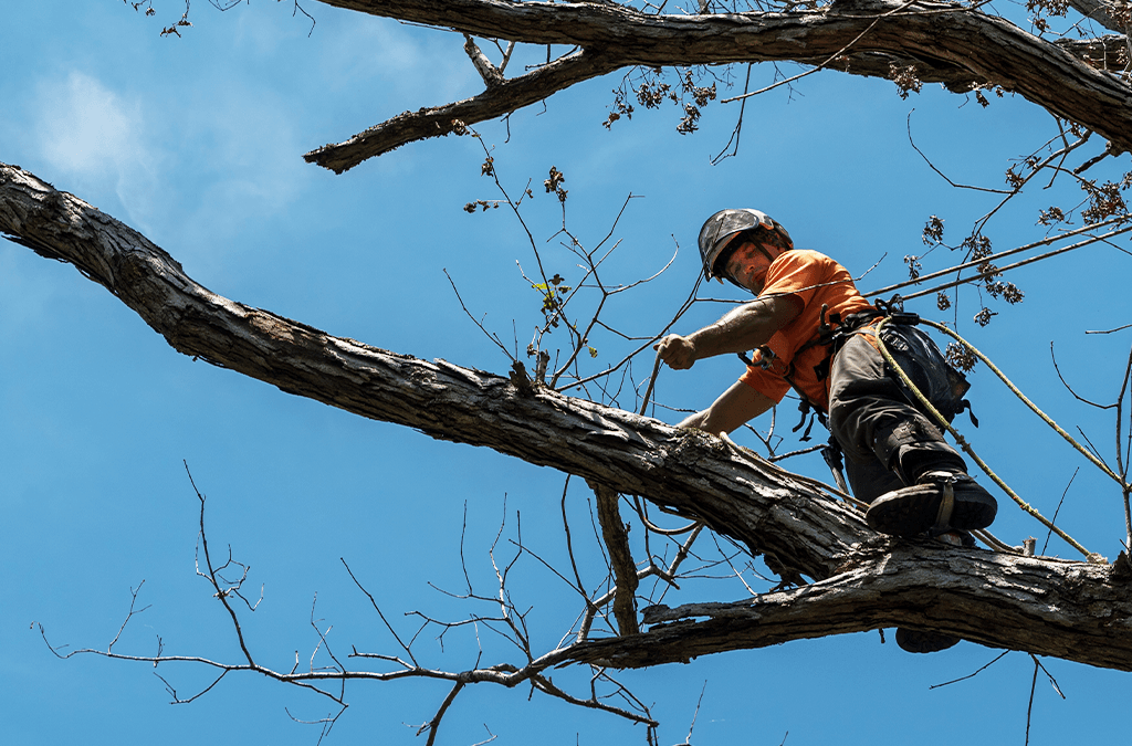 Time to Say Goodbye to Your Tree: Tree Removal